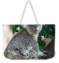 Koala Joey And Mom Weekender Tote Bag by Jamie Pham
