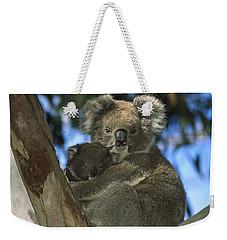 Koala Phascolarctos Cinereus Mother Weekender Tote Bag by Konrad Wothe