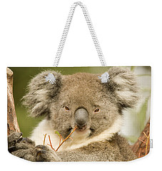 Koala Snack Weekender Tote Bag by Mike  Dawson