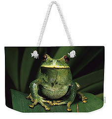 Marsupial Frog Gastrotheca Orophylax Weekender Tote Bag by Pete Oxford