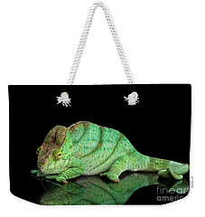 Parson Chameleon, Calumma Parsoni Orange Eye On Black Weekender Tote Bag by Sergey Taran