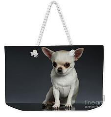 Portrait Little Chihuahua Dog Sitting On Dark Backgroun Weekender Tote Bag by Sergey Taran
