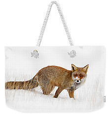 Red Fox In A Snow Covered Scene Weekender Tote Bag by Roeselien Raimond