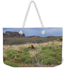Red Long-tailed Medowlark Bird, Patagonia, National Park Torres Del Paine, Chile. Weekender Tote Bag by Anna Soelberg