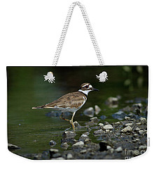 Killdeer  Weekender Tote Bag by Douglas Stucky