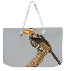 Southern Yellow-billed Hornbill Tockus Weekender Tote Bag by Panoramic Images