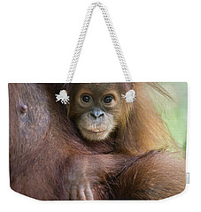 Sumatran Orangutan 9 Month Old Baby Weekender Tote Bag by Suzi Eszterhas