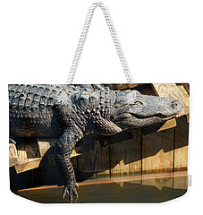 Sunbathing Gator Weekender Tote Bag by Carolyn Marshall