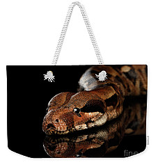 The Boa Constrictors, Isolated On Black Background Weekender Tote Bag by Sergey Taran