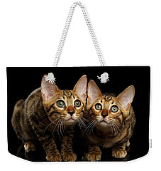 Two Bengal Kitty Looking In Camera On Black Weekender Tote Bag by Sergey Taran