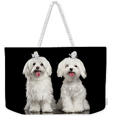 Two Happy White Maltese Dogs Sitting, Looking In Camera Isolated Weekender Tote Bag by Sergey Taran