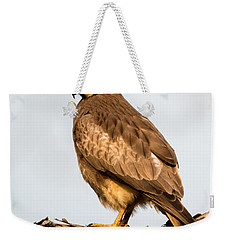 White-eyed Buzzard Butastur Teesa Weekender Tote Bag by Panoramic Images