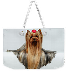Yorkshire Terrier Dog With Long Groomed Hair Lying On White  Weekender Tote Bag by Sergey Taran