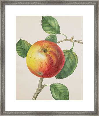 An Apple Framed Print by Elizabeth Jane Hill