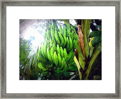 Banana Plants Framed Print by Lanjee Chee