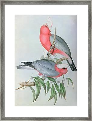 Birds Of Asia Framed Print by John Gould