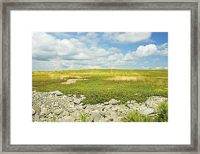 Blueberry Field With Blue Sky And Clouds In Maine Framed Print by Keith Webber Jr