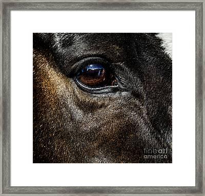 Bright Eyes - Horse Portrait Framed Print by Holly Martin
