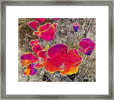 Californian Poppies Framed Print by Irina Hays