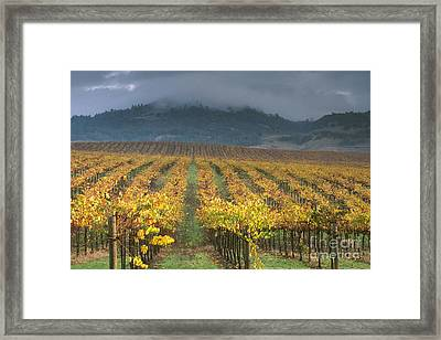 Clouds Over Alexander Valley Vineyard On A Fall Morning Framed Print by Gary Crabbe