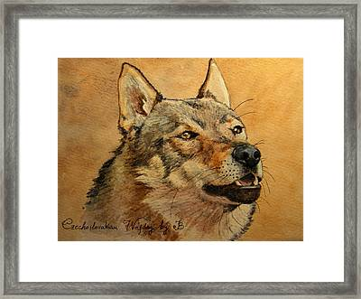 Czechoslovakian Wolfdog Portrait Framed Print by Juan  Bosco