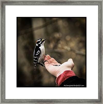 Downy Woodpecker In Hand Framed Print by LeeAnn McLaneGoetz McLaneGoetzStudioLLCcom