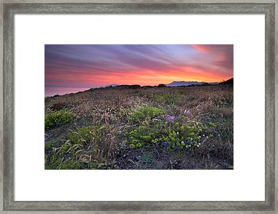 Flowers At The Sea Framed Print by Guido Montanes Castillo