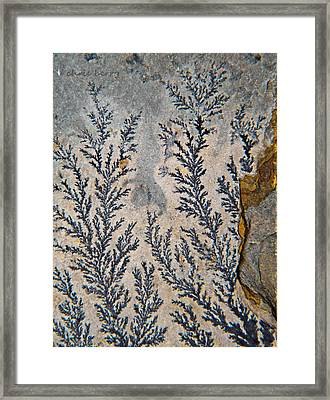 Fossil  Framed Print by Chris Berry