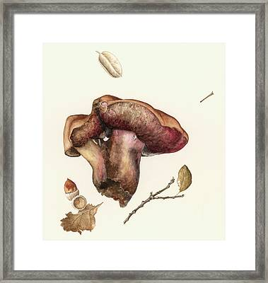 Fungus Framed Print by Alison Cooper