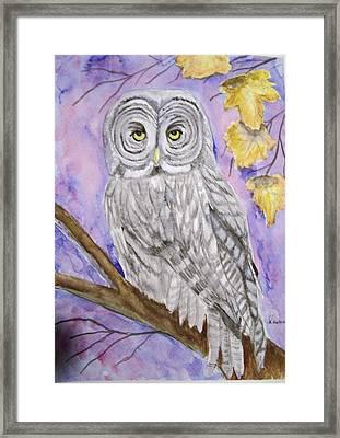 Grey Owl Framed Print by Belinda Lawson