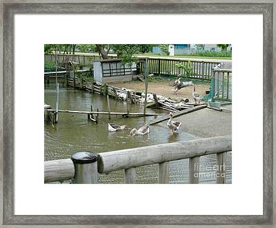 Japanese Geese Framed Print by Evgeny Pisarev