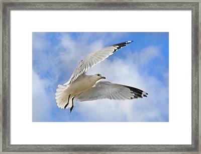 Jekyll Island Seagull Framed Print by Betsy C Knapp