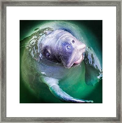 Manatee World Framed Print by Karen Wiles