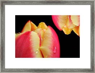 Passion Framed Print by Mark Ashkenazi