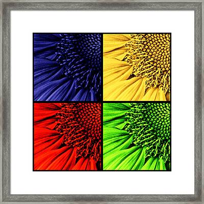 Sunflower Medley Framed Print by Mark Kiver