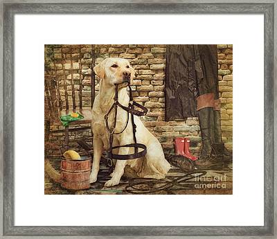 Tack Cleaning Day Framed Print by Trudi Simmonds