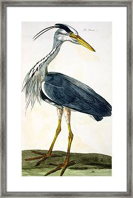 The Heron  Framed Print by Peter Paillou
