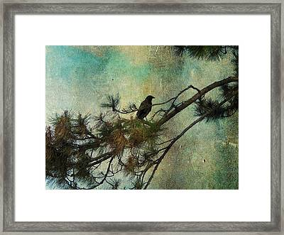 The Old Pine Tree Framed Print by Gothicolors Donna Snyder