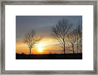Trees At Sunset Framed Print by Tony Murtagh
