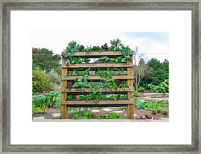 Vegetable Garden 1 Framed Print by Lanjee Chee