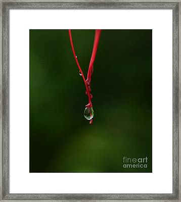 Waterdrop Framed Print by Michelle Meenawong