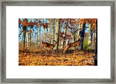 White Tail Deer Leaping  Framed Print by Peggy  Franz