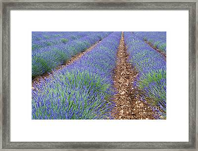 080720p071 Framed Print by Arterra Picture Library