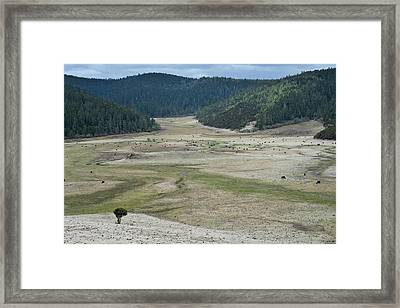 A Herd Of Yaks In Potatso National Park Framed Print by Tony Camacho