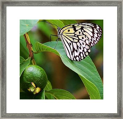 A Peaceful Moment Framed Print by Bruce Bley