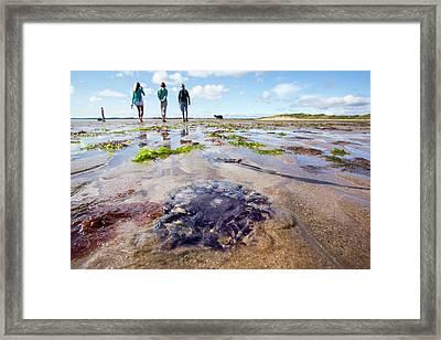 A Purple Jellyfish Framed Print by Ashley Cooper