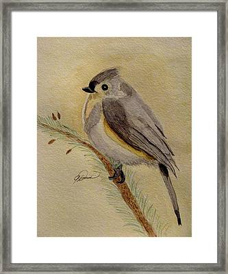 A Tufted Titmouse Framed Print by Angela Davies