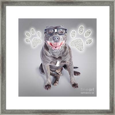 Access To Smart Dog Training Framed Print by Jorgo Photography - Wall Art Gallery