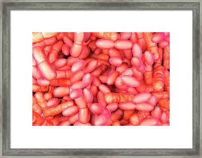 Acetic Acid Bacteria Framed Print by Science Artwork