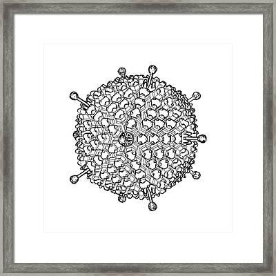 Adenovirus Framed Print by Russell Kightley